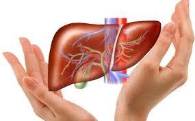 ĐTHT tăng cường chức năng gan
